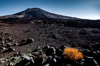 Teide and yellow bush