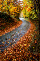 autumn road 2