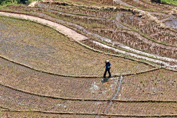 Indonesia, Java - Working the rice fields